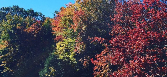 A Day Trip from Flatiron and NYC – Fall Foliage in Northeast PA at Hemlock Farms and LVCC!