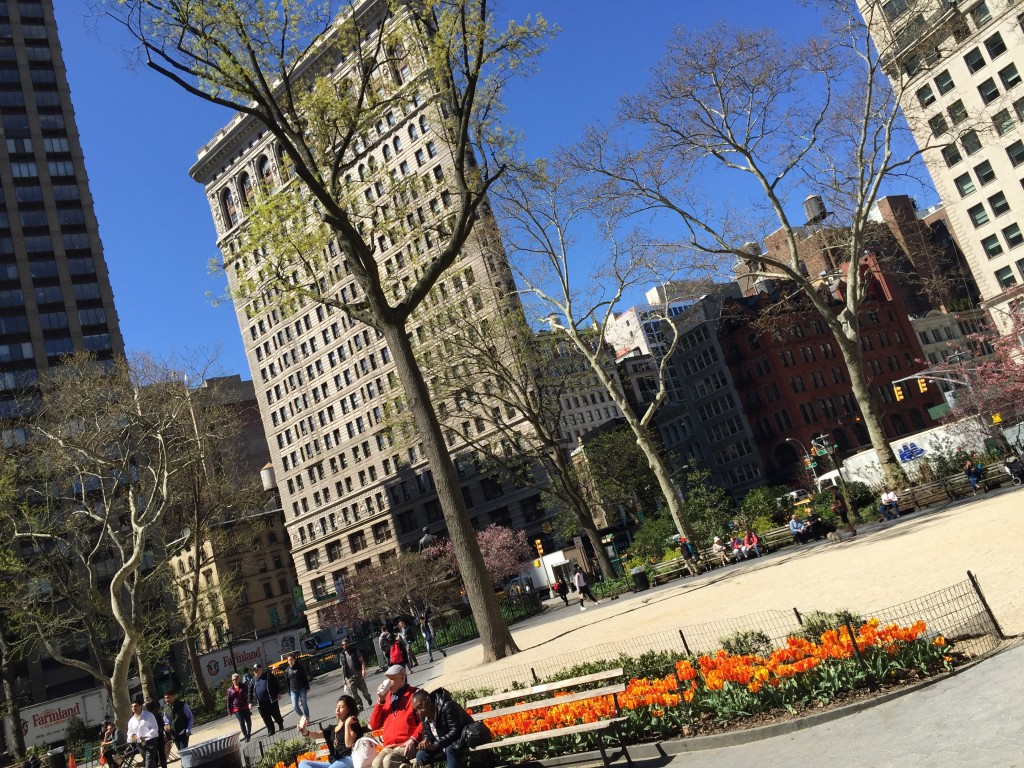 Flowers in the Bloom in Mad Square Park!