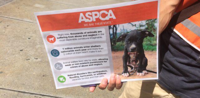 ASPCA on 23rd St