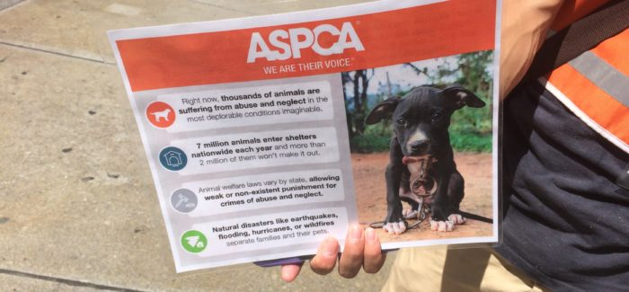 ASPCA Collecting Donations on West 23rd Street